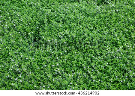 Green football field grass. used for background or material  design.