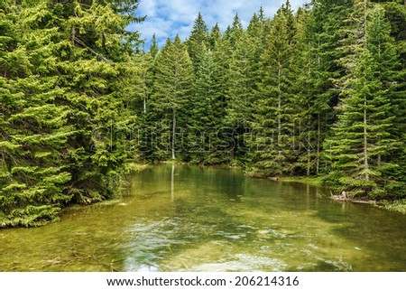 Green forest and lake. natural landscape - stock photo