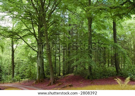 Green forest and road in the Highlands - stock photo