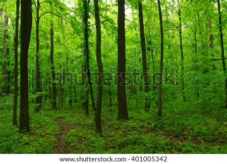 Green forest and the path