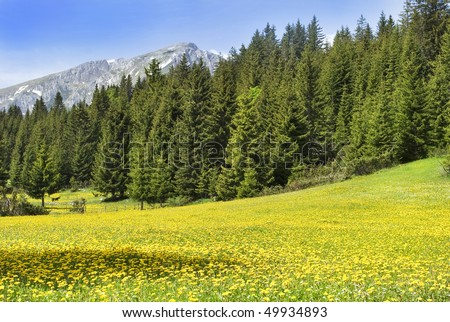 Green forest and yellow meadow in summer, mountain scenery. - stock photo