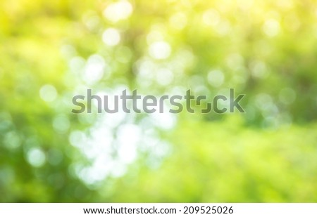 Green forest bokeh background  - stock photo
