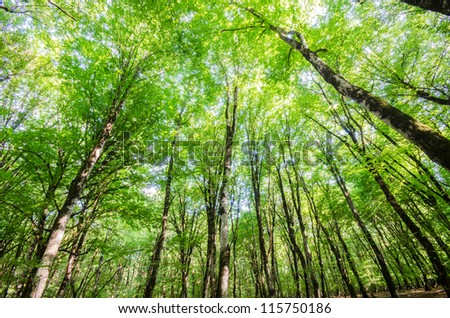 Green forest during bright summer day - stock photo