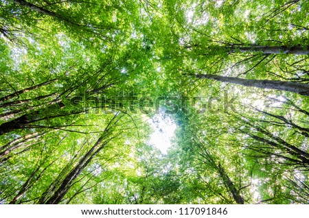 Green forest during bright summer day