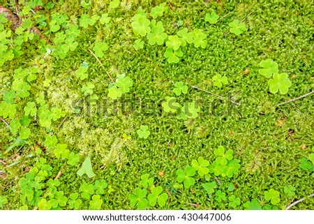 Green forest floor - moss with shamrocks