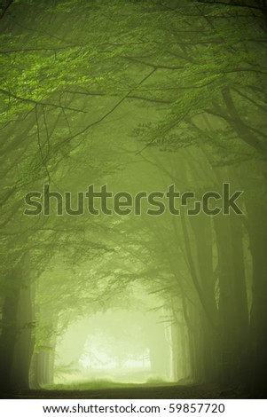 Green forest in the fog - stock photo
