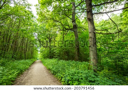 green forest landscape