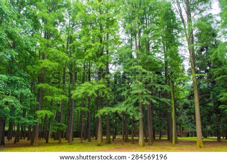 Green forest landscape of trees covered with moss - stock photo