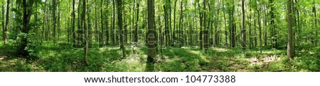 Green forest landscape with trunks of trees covered with a moss