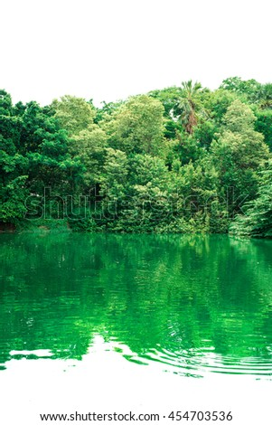 Green forest reflexion shadow. - stock photo