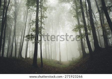green forest scene - stock photo