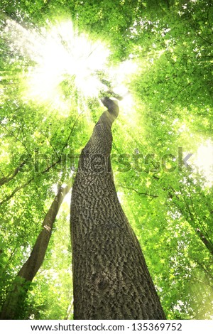 Green forest. Tree with green leaves and bright sun rays - stock photo
