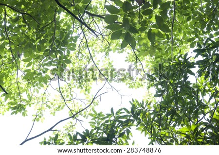 Green forest Tree with green Leaves and sun light Bottom view - stock photo