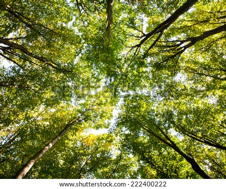 Green forest. Tree with green Leaves and sun light. Bottom view background - stock photo