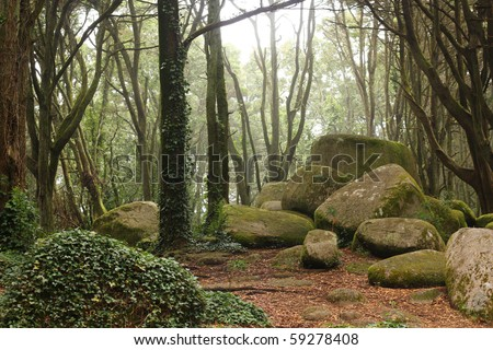 Green forest trees with rocks - stock photo