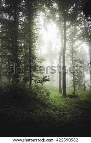 green forest vegetation in summer sun light