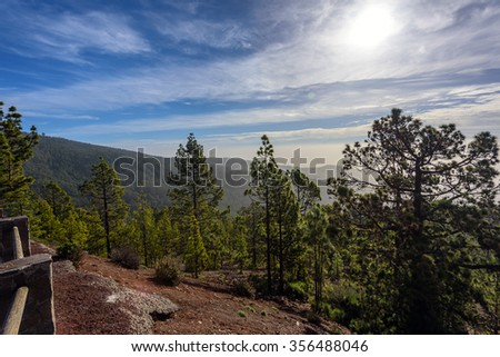 Green Forest with Fir Trees on Mountains on Tenerife island, Spain - stock photo