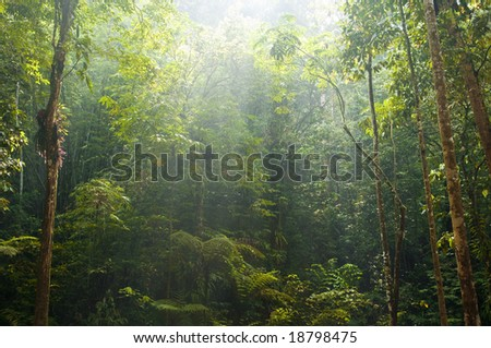 green forest with morning sunlight - stock photo