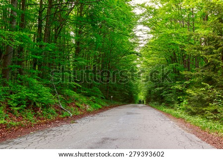 Green forest with pathway in sprintime in Hungary