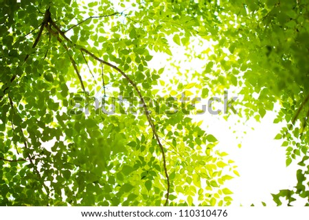Green forest with sunlight - stock photo
