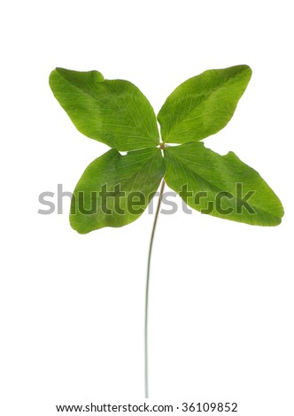 green four-leaf clover on white background
