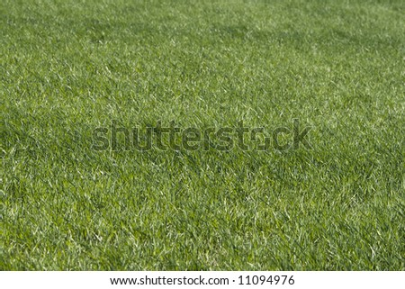 Green fresh grass background - stock photo