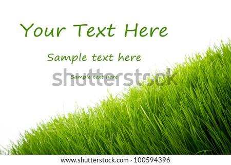 Green fresh grass over white background - stock photo