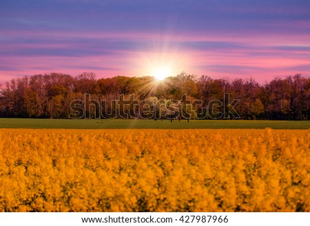 Green fresh grass under blue sky at sunset - stock photo