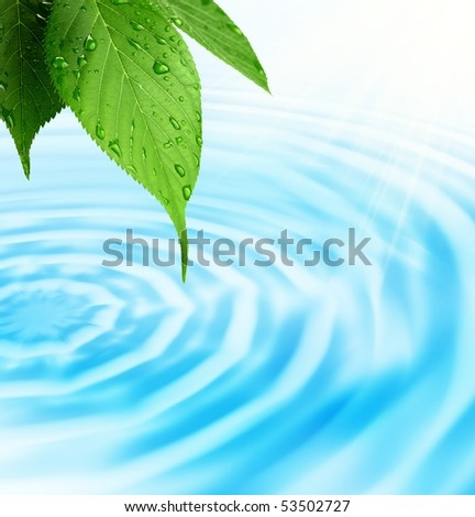 Green fresh leaf with water drop on bright background - stock photo