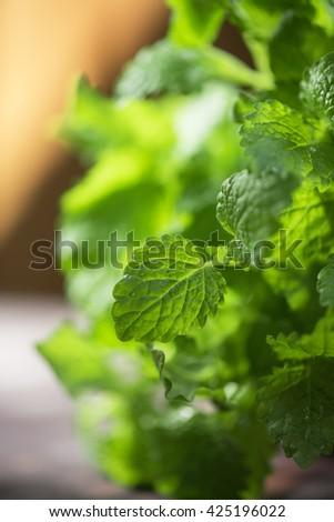 Green fresh melissa - stock photo