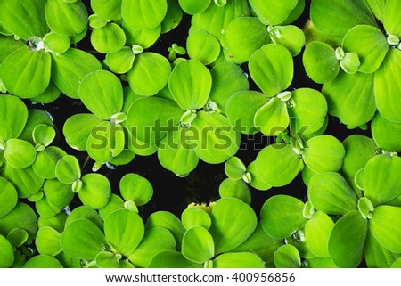 green fresh. Rain drops on fresh green leaves. Green background with leaves. - stock photo