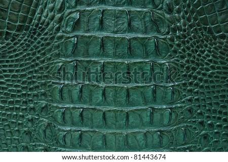 Green Freshwater crocodile bone skin texture background. - stock photo