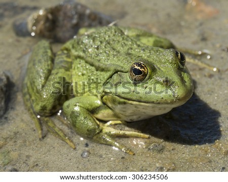 green frog on shore