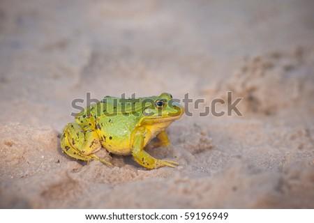green frog seat on sand beach on sunset - stock photo