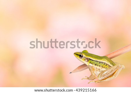 Green frog with wood pencil as idea for education and business - stock photo