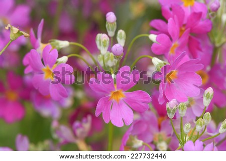 Green garden and colorful flower around the house. - stock photo
