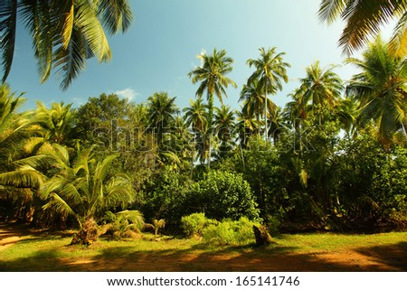 Green garden with palm trees at sunny day