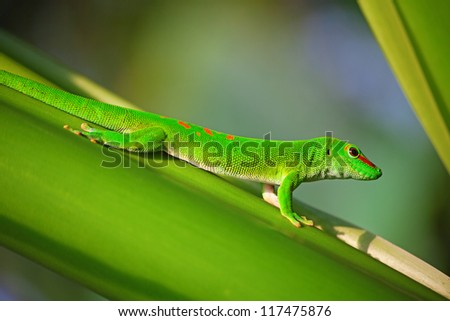 Green gecko on the leaf (Zurich zoo)