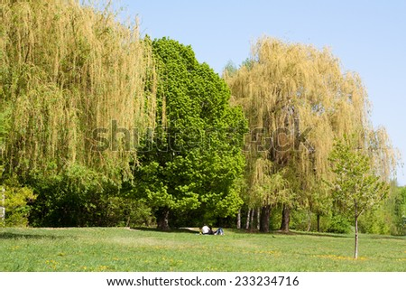 Green glade with three large trees, people having rest on the grass - stock photo