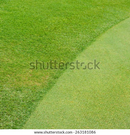 Green golf field background - stock photo