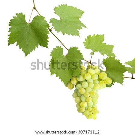 green grapevine leaves with grapes as corner on white  - stock photo