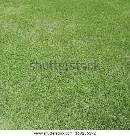 green grass - stock photo