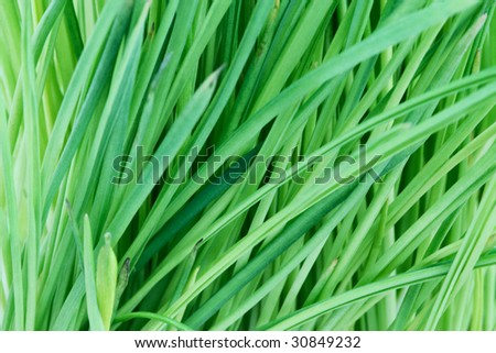 Green grass abstract background - stock photo