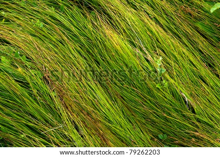 Green grass - abstract natural background - stock photo