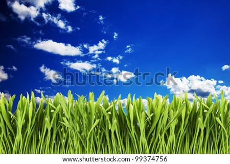 Green grass against cloudy blue sky