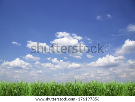 Green grass against the blue sky. - stock photo
