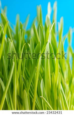 Green grass against the sky background
