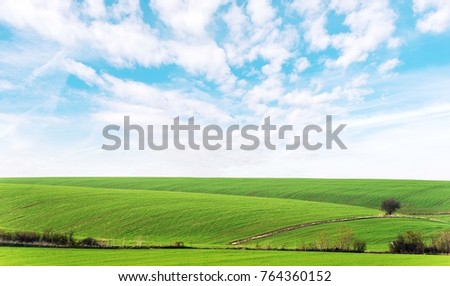 green grass agriculture fields of wheat and blue clouds. agricultural green field landscape