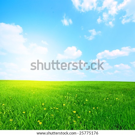 Green grass and blue sunny sky spring landscape. Perfect for backgrounds - stock photo