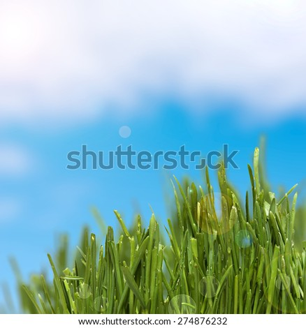 green grass  and cloudy sky - stock photo